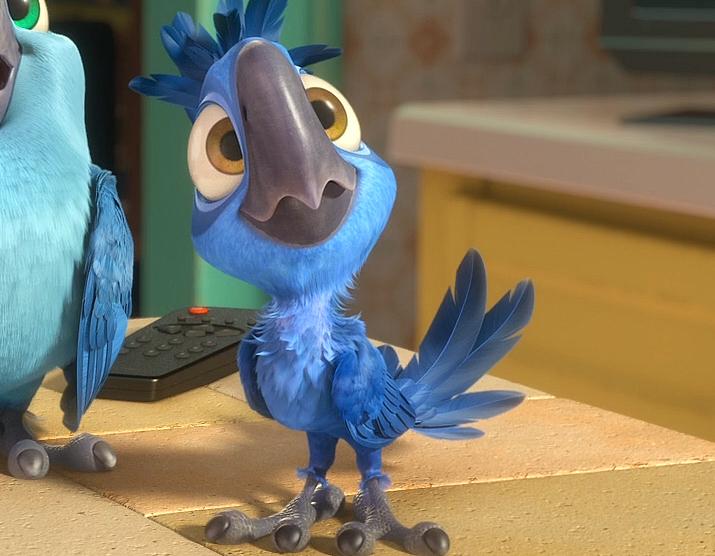 картинки попугая голубчика парная